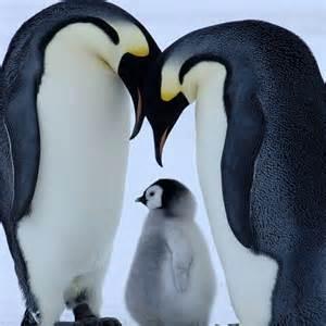 Penguin Family Tattoo