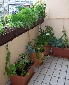 krauter pflanzen ein balkon voller duft With balkon ideen kräuter