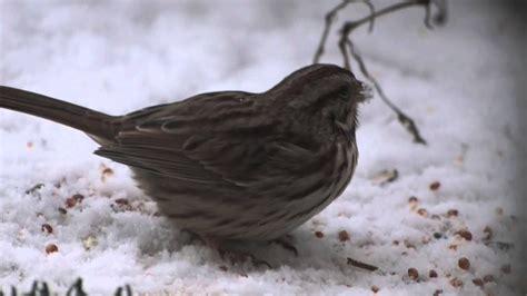 winter birds  maryland compilation filmed  sony