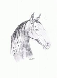 Pencil Sketch- Quarter horse/Arab | Before You Call