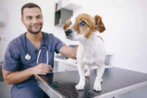 homoeopathische arzneimittel fuer hunde thuja