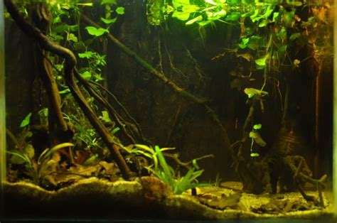 south american cichlid tank setup google search fish