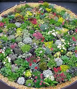 Blühende Zimmerpflanzen Pflegeleicht : steingarten stauden mix steingartenstauden bei baldur garten ~ Michelbontemps.com Haus und Dekorationen