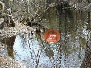 Unexplained Swamp Monster Sighting - YouTube