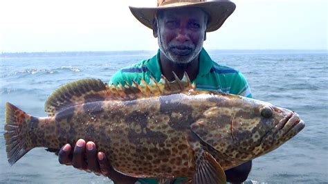 grouper catch goliath fishing offshore