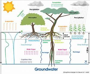 1  Conceptual Illustration Of Water Transport Processes In The