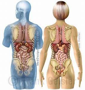 Anatomie dickdarm mensch