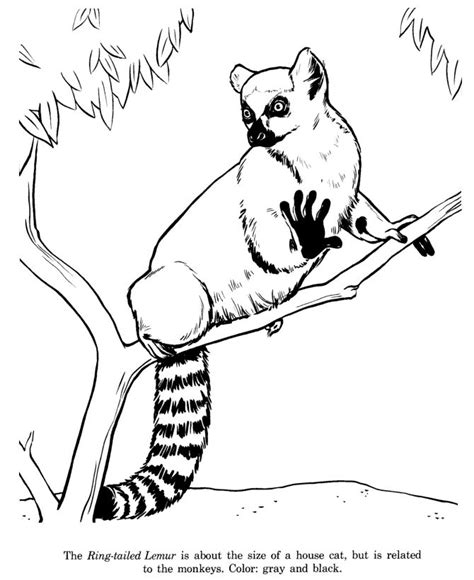animal coloring pages images  pinterest