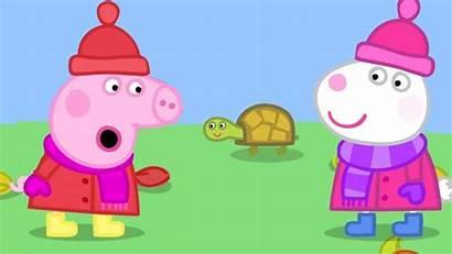 Pig Peppa Naughty Cartoons Tortoise Season Children
