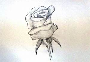 Rose Flowers Drawing Sketch Photo How To Draw A Rose ...