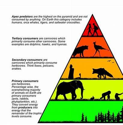 Chain Animal Chains Pyramid Magazine Pyramids Worldbuilding