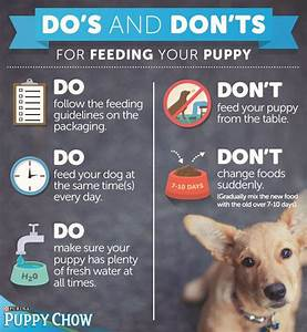 34 best new dog tips images on pinterest your dog dog for New dog tips