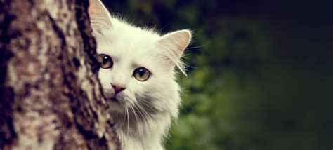 Cute White Cat  Fast Online Image Editor