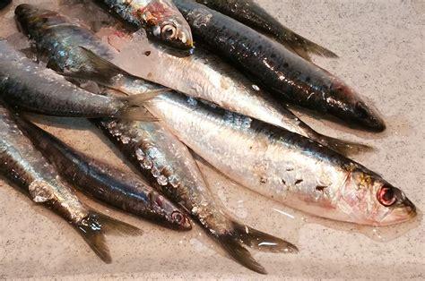 cuisiner des sardines fraiches rillettes de sardines fraiches