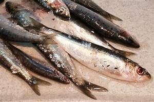 Filet De Sardine : rillettes de sardines fraiches fait maison ~ Nature-et-papiers.com Idées de Décoration