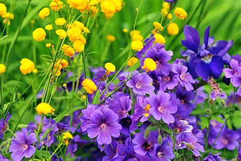 Garten Pflanzen Im Juli by Welche Blumen Bl 252 Hen Im Juni Brautstrau Des Monats Ein Fr