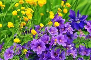 Pflanzen Im Juli : was bl ht gerade g rten pflanzen planten un blomen ~ Orissabook.com Haus und Dekorationen