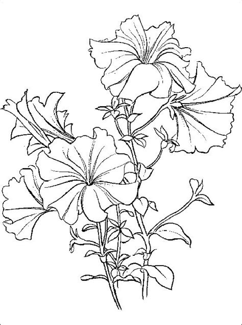 Kleurplaat Petunia by Coloring Page Fir Petunia Petunia Coloring And Printable