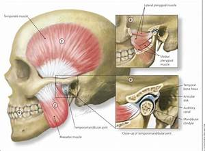 Tmj  Temporomandibular Joint Dysfunction