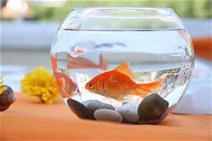 Goldfisch Haltung Im Teich : goldfische im gartenteich haltung berwintern ~ A.2002-acura-tl-radio.info Haus und Dekorationen