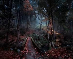 Wallpaper, 2500x2000, Px, Bulgaria, Creeks, Fall, Forest