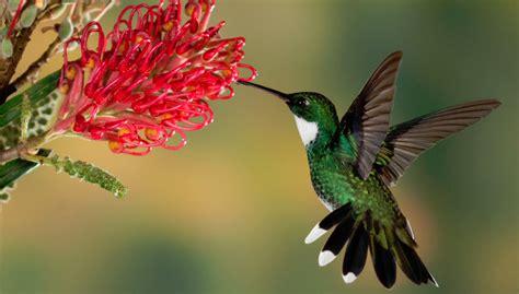 Best Hummingbird Feeders Reviews 2018  Hummingbirds Plus