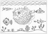 Fish Coloring Puffer Nemo Yellow Finding Inflated Funny Cartoon Colorir Cool Cartoons Fishing Adult sketch template