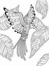 Coloring Paradise Bird Pages Adult Printable Sheets Doverpublications Getcolorings Tropical Books Dover Birds Mandala Colouring Publications Drawing Phoenix Mandalas Flower sketch template