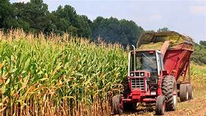 More corn grown in U.S. this year than ever before. Thanks ...