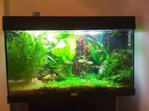Asian Themed Fish Tank Decorations
