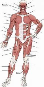 Muscle Structure - Medical Terminology