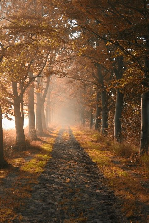 Autumn wallpapers, backgrounds, images 240x320— best autumn desktop wallpaper sort wallpapers by: 50+ Autumn Phone Wallpaper on WallpaperSafari