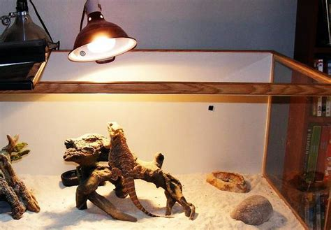 lighting for bearded dragon vivarium what is the right temperature for bearded dragons