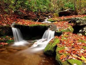 Natural Beauty Wallpaper For Desktop Bergerak On Of Nature ...