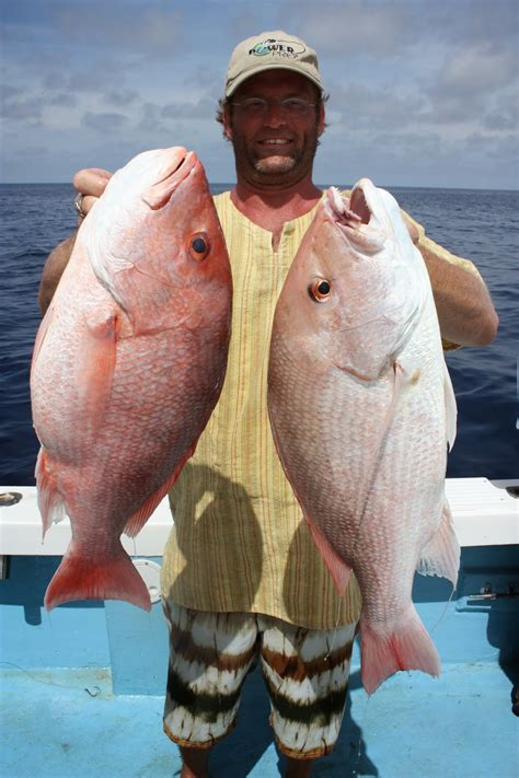 fish snappers