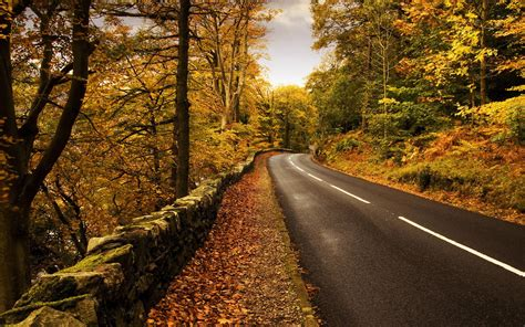 Car Wallpapers Desktops Nature Pictures by Nature Road Trees Forest Wallpapers Hd Desktop And