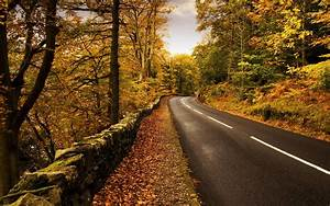 Nature, Road, Trees, Forest, Wallpapers, Hd, Desktop, And, Mobile, Backgrounds