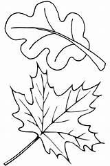 Oak Coloring Leaves Pages Leaf Printable Getcolorings Print sketch template