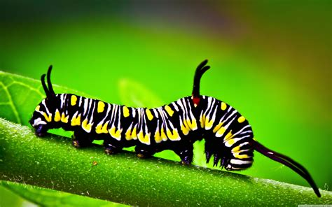 Caterpillar Macrowallpaper3840x2400 Wallpaper