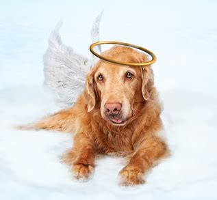 pets   heaven psychology today