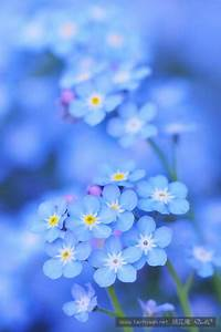 唯美花朵图片大全,唯美意境 - 唯美 - 桃花庵