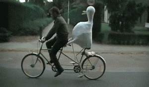 The .Gif Friday Post No.161 – Suckerkick Fail, Ducky Bike ...