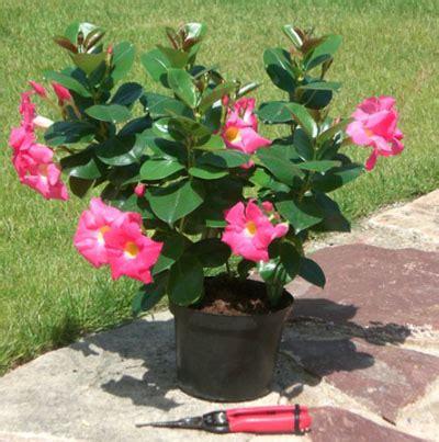 plante en pot exterieur plein soleil plante en jardiniere exterieur l atelier des fleurs