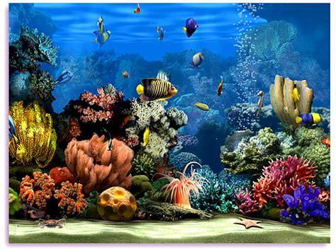 3d Animated Aquarium Wallpaper Free - animated fish aquarium screensaver free living marine