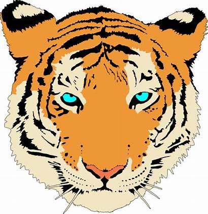 Tiger Bengal Clip Clipart Vector Clker