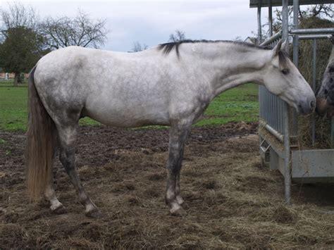cheval gris quel couleur de tapis
