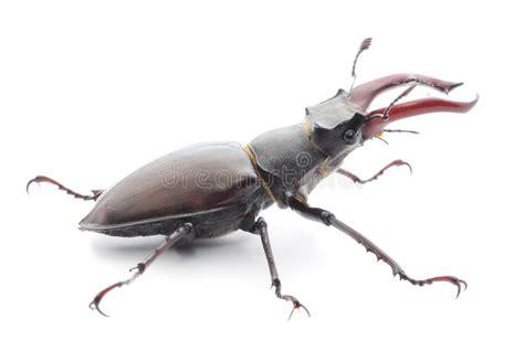Ekoxe arkivfoto. Bild av horned, medf8ort, invertebrate ...