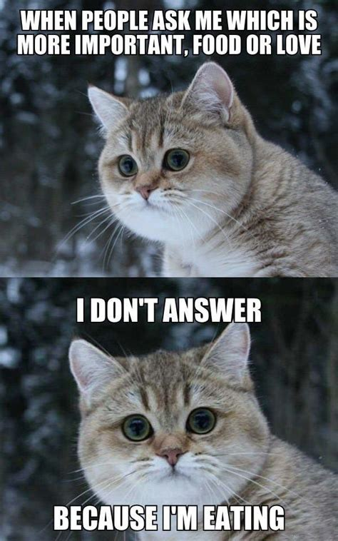 Fat Cat Meme Funny Fat Cat Pictures With Quotes