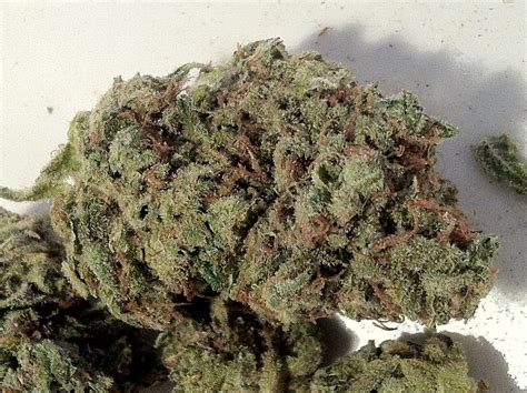 killer queen medical cannabis strain review clark french