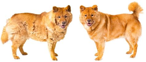 Reducing Shedding In Dogs by Reduce Shedding For Dogs In Happy Go Healthy